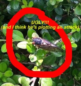 cicada ugly