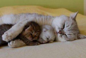cat-hugging-kittens